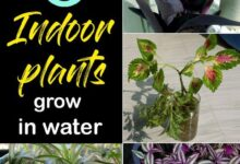 8 Best Indoor plant grow in water | Water garden plants -