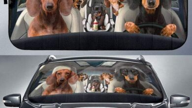 Dachshund Family Funny Safe And Driver Auto Sun Shade Unique Car Decor - Universal Fit