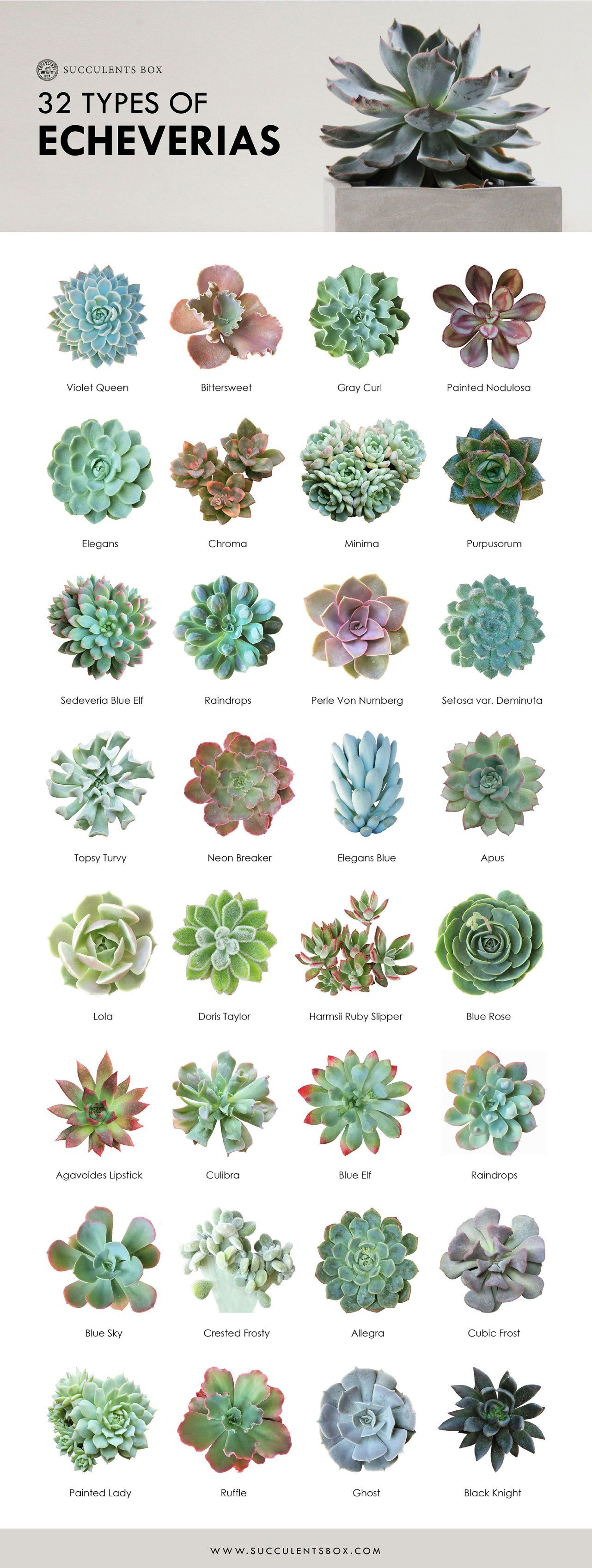 Free Printable: 11 Succulent Collections