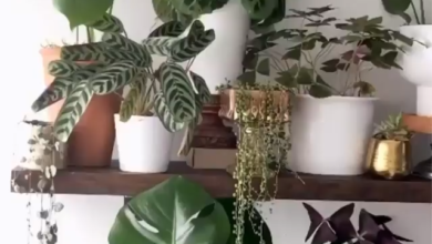 Pure satisfaction watching these plants grow