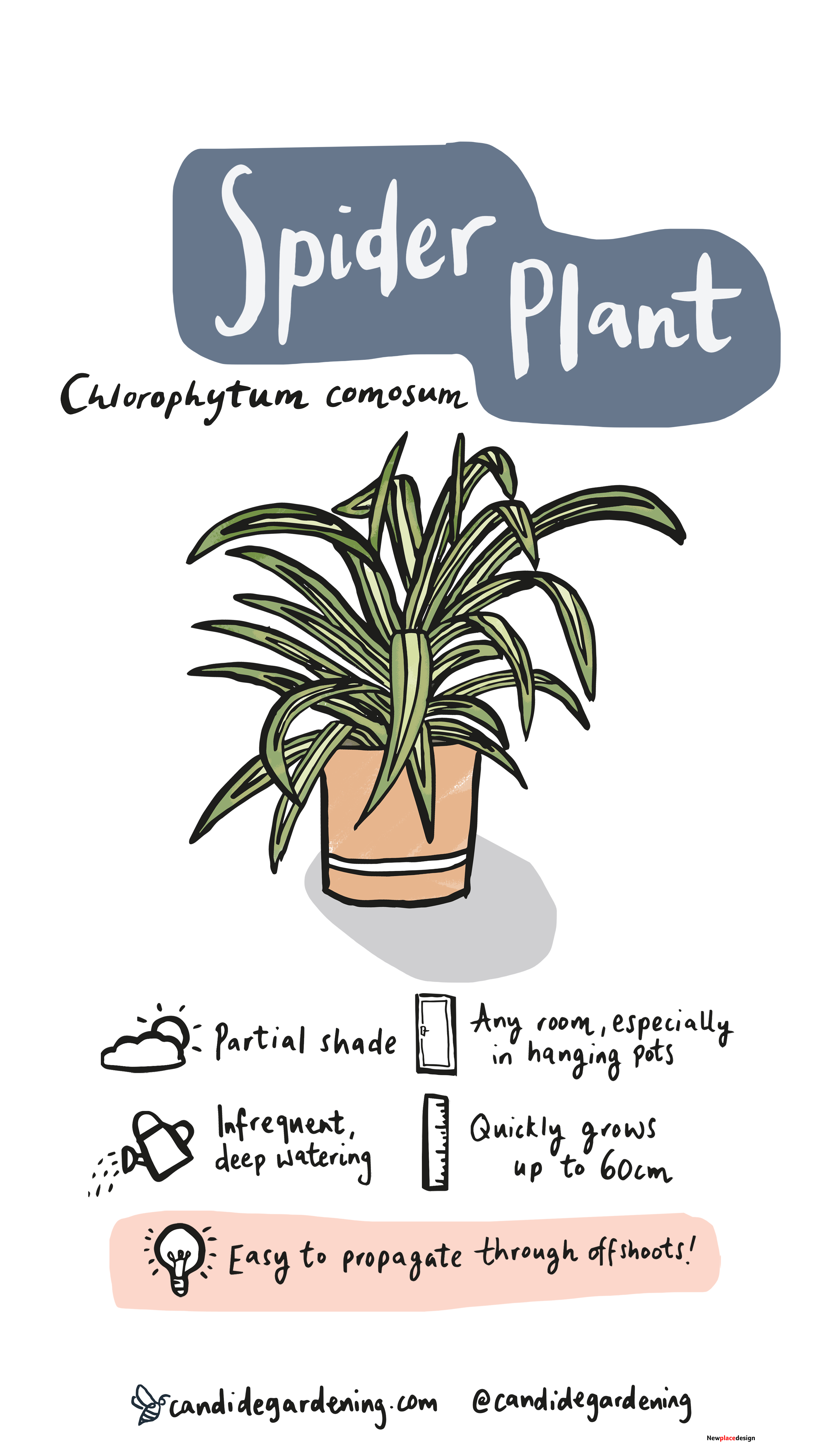 Spider Plants Gained Their Popularity From Their Incredibly Easy-Going Nature